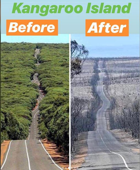 Deforestation on Kangaroo Island